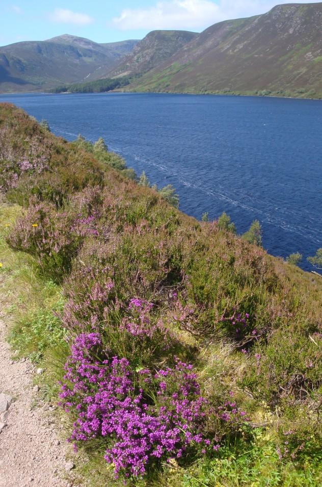 Run round Loch Muick - 8 miles (1)