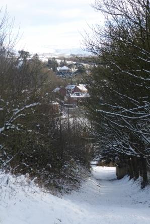 Snow Jan. 17th 2016 (6)