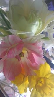 Flowers on the windowsill (3)