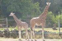 Day 1 - Paignton zoo (17)