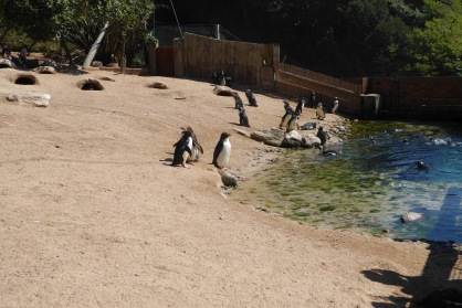 Day 4 - Torquay coastal zoo and aquarium (4)