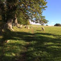walk-around-lanercost-23rd-oct-2