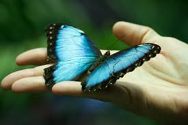 butterfly-in-hand