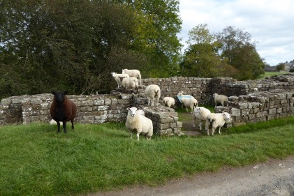 Hadrian's Wall 24th Sept (15)