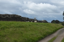 Hadrian's Wall 24th Sept (16)
